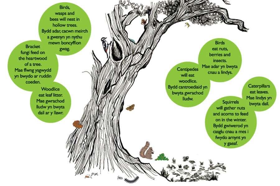 Tree/Wildlife Illustration for Interpretation panel, Somerset