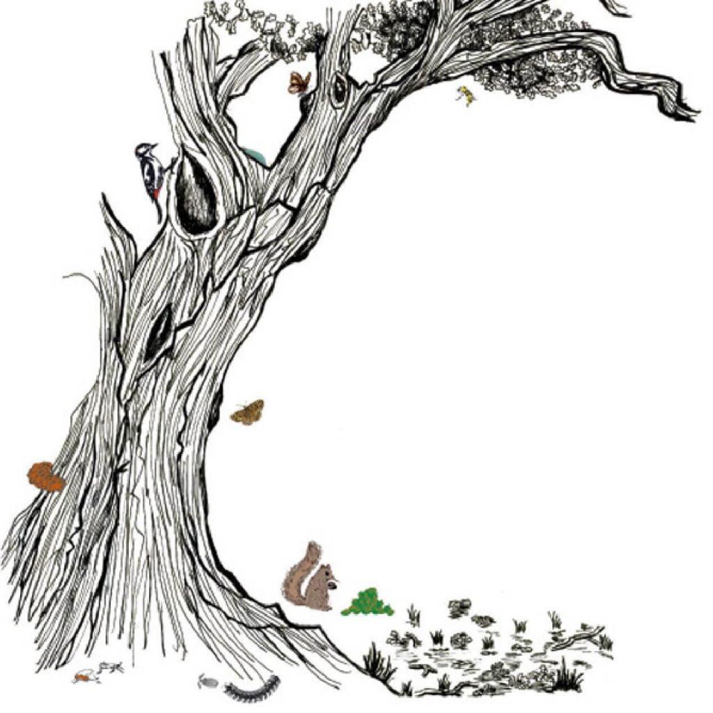 Tree Wildlife Bird Illustration Somerset